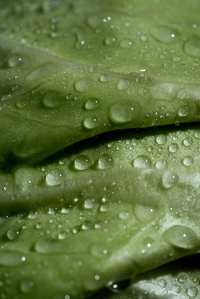Полезные особенности капусты